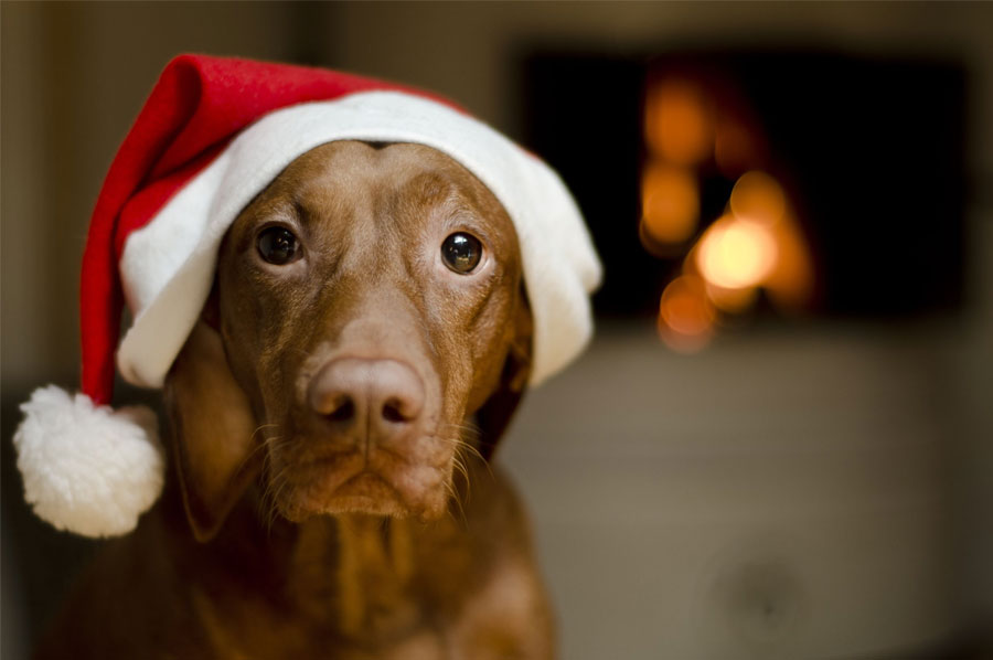 5 Pet Safety Tips for Christmas
