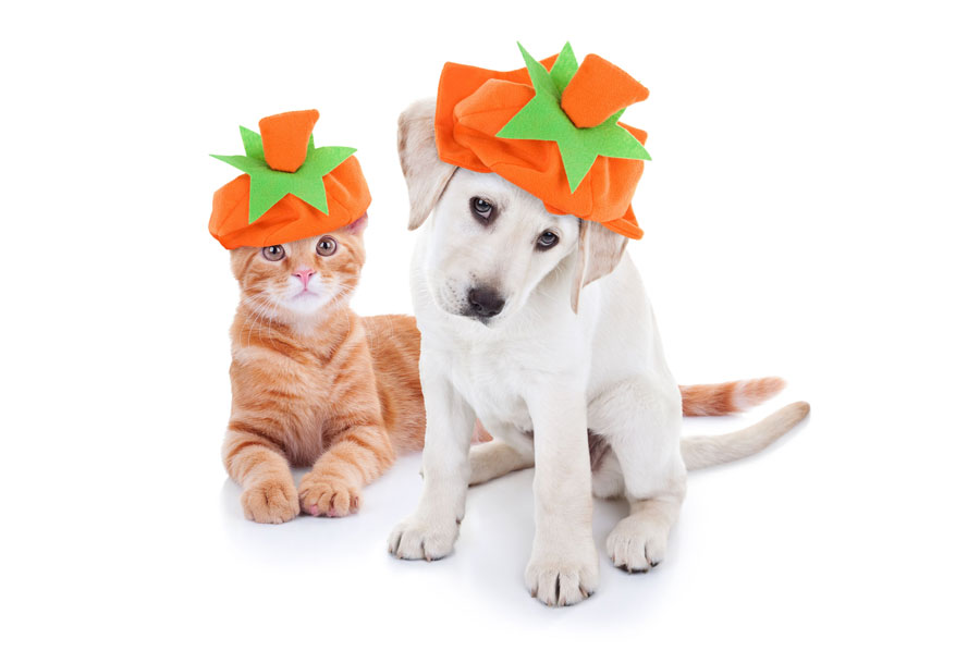 Seven Tips to Keep Your Pets Safe this Halloween