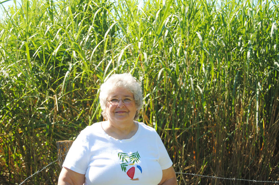 Miscanthus Production Offers Financial Security for Missouri Farmer