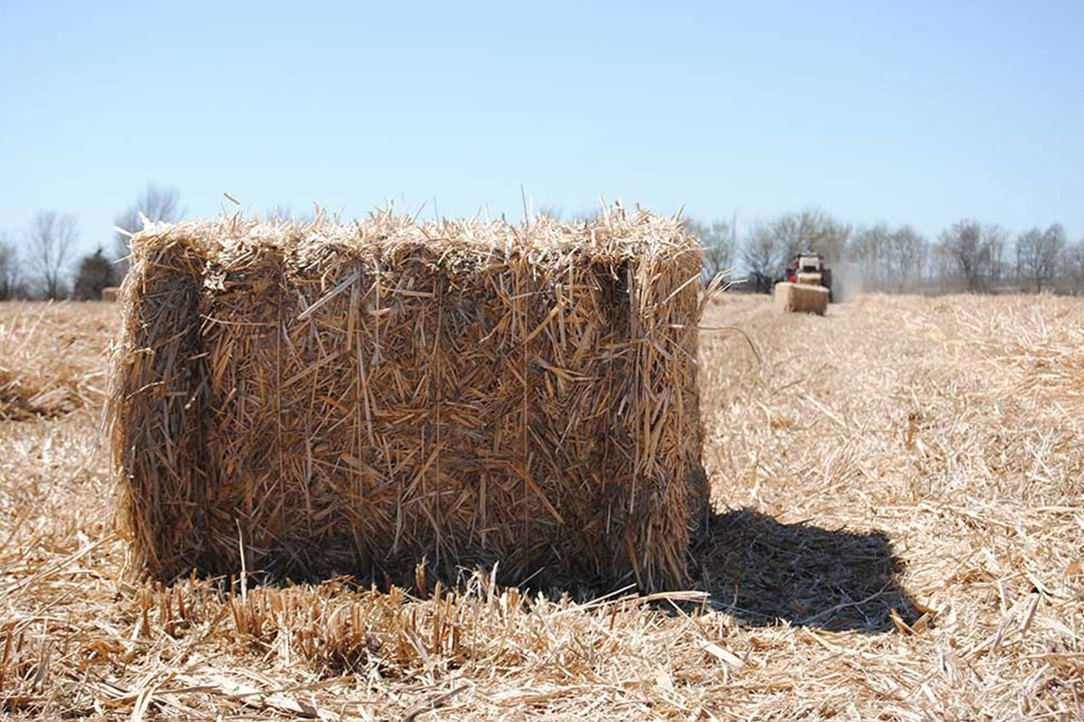 MFiber Bailed Miscanthus
