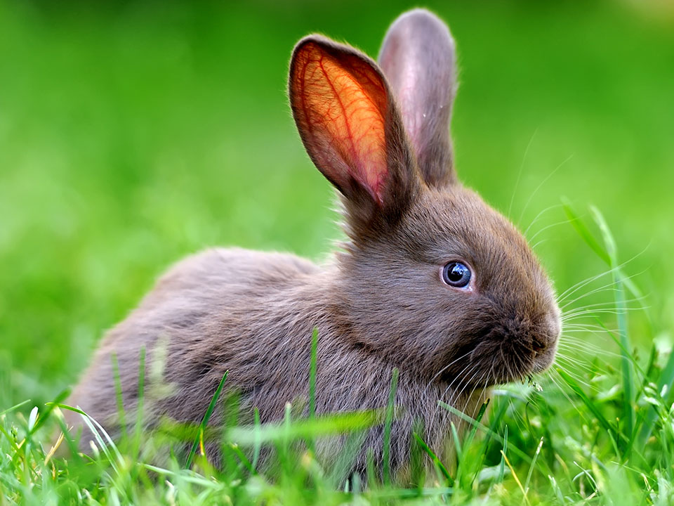 MFiber Pets We Serve Rabbits