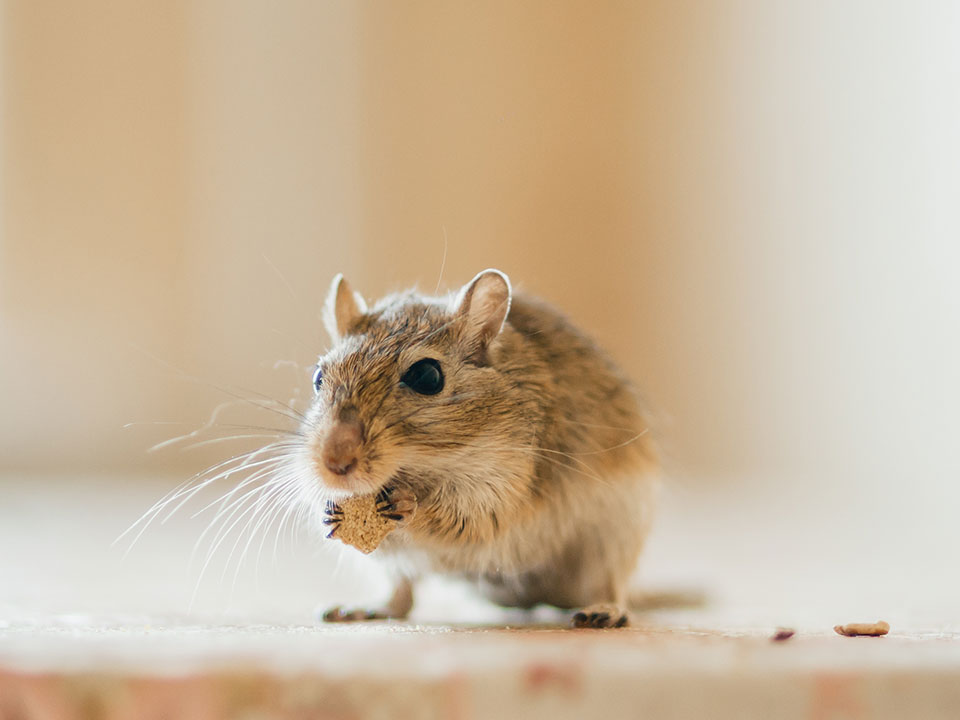 MFiber Pets We Serve Gerbils